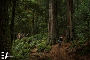 Tori Broughton (Expert Women) goes through some giant Cedars.