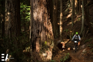 Cascade Cross founder and race director, Ryan Rickerts (Sport Senior Men 30-39) cruising past an old growth Doug Fir.