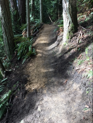 Freshly cleaned up trail.